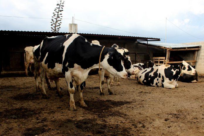 Foto: Secretaría de Desarrollo Rural